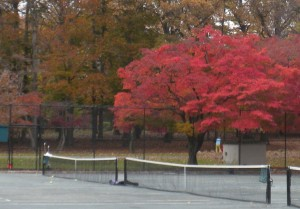 Kissena Park in autumn