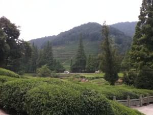 Aug 2: Dragon Well tea village 梅家坞