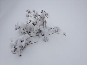 Mao's  Snow