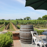The North Fork vineyards