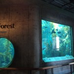 Kelp Forest 海带森林