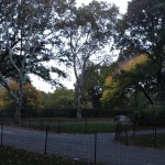 Central Park in the dusk