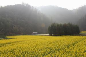 Meishan 梅山