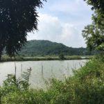Qi'Ao 淇奥湿地