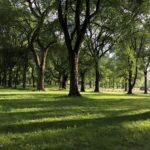 Central Park 2018
