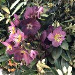 Macy's flowers