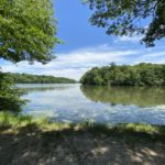 The Swan Lake 天鹅湖