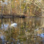 Fresh Pond on PL2